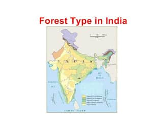 Forest Type in India and forest in india
