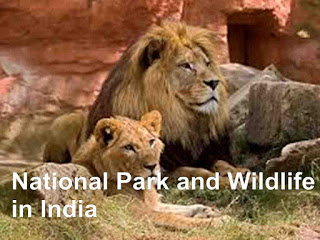 indian national park list and indian sanctuaries